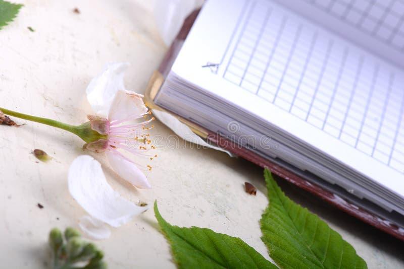 Caderno do papel vazio no fundo branco do vintage com elementos scrapbooking fotografia de stock