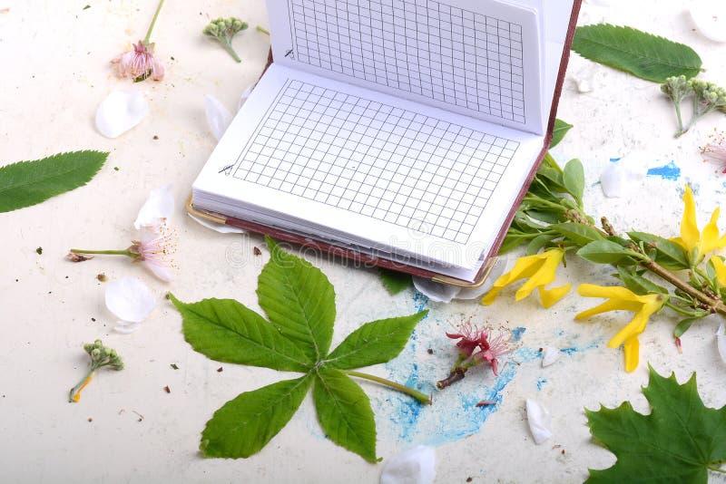 Caderno do papel vazio no fundo branco do vintage com elementos scrapbooking imagem de stock royalty free