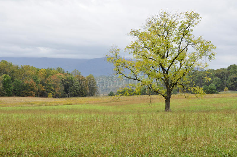 Cades Cove. Part of the Great Smoky Mountains National Park, TN/NC, USA stock images