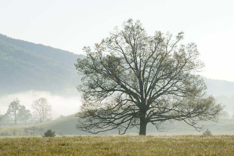 Cades liten vikträd på den Great Smoky Mountains nationalparken, Townsend, TN arkivfoto