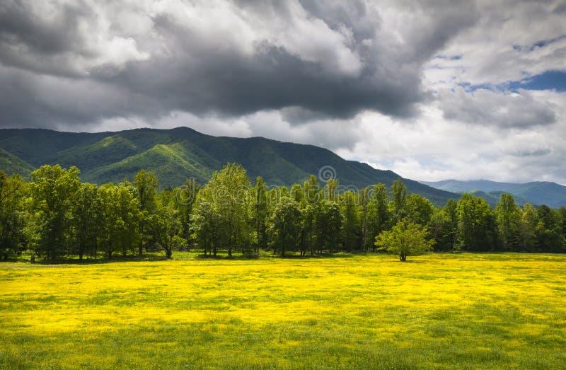 Cades Zatoczki Wiosna Kwitnie Wielkie Dymiące Góry obrazy royalty free