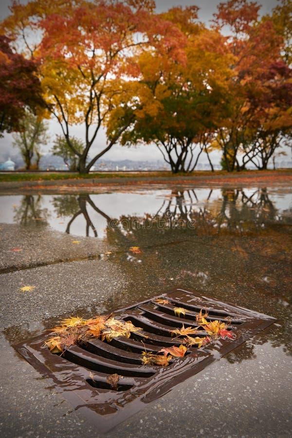 Caditoia e Autumn Leaves fotografia stock