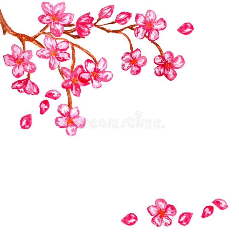 Cadre abstrait avec des fleurs de fleurs de cerisier dans les coins, peinture rose d'aquarelle de Sakura illustration libre de droits