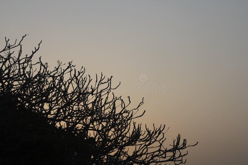 Cadre artistique de vieux d'arbre de branche de silhouette contexte Arabe de ciel photo libre de droits