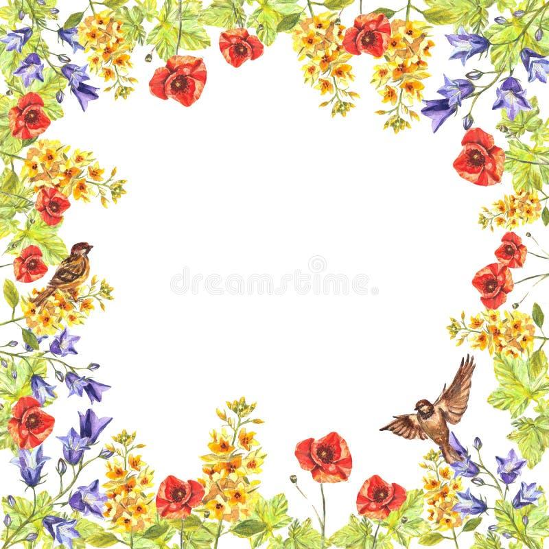 Cadre carré d'aquarelle d'eremurus, chiots, jacinthes des bois, feuilles, moineaux illustration stock