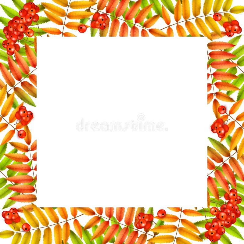 Cadre carré d'automne de vecteur, érable jaune rouge et feuilles de cendre de montagne, cendre de montagne illustration de vecteur