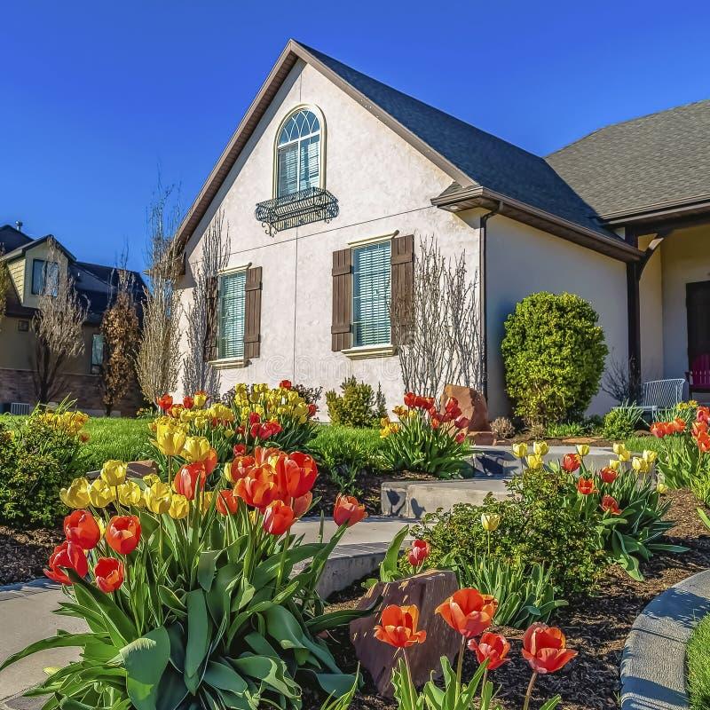Cadre carré jaune et tulipes oranges rayant une voie qui mène à l'entrée d'une maison image stock