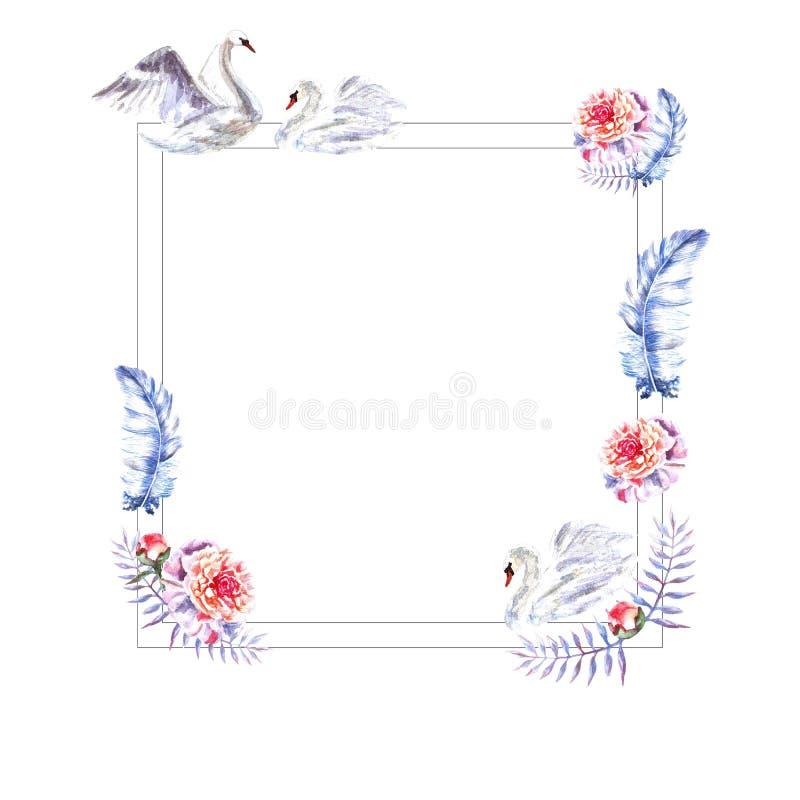 Cadre carré peint à la main d'aquarelle des plumes, pivoines, brindilles, cygnes illustration libre de droits