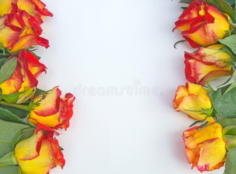 Cadre crème et rouge de Rose. image libre de droits