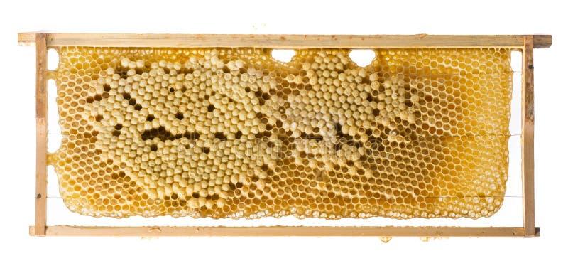 Cadre d'abeille images libres de droits