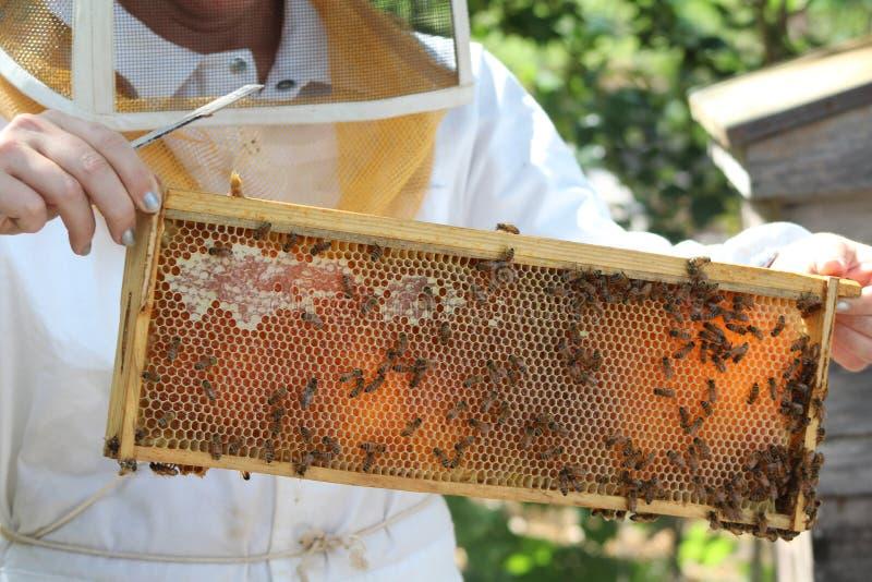 Cadre d'abeille avec des abeilles de miel image libre de droits