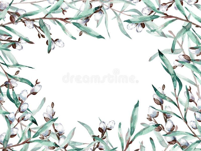 Cadre d'aquarelle des branches de saule de chat avec l'espace de copie Illustration illustration de vecteur