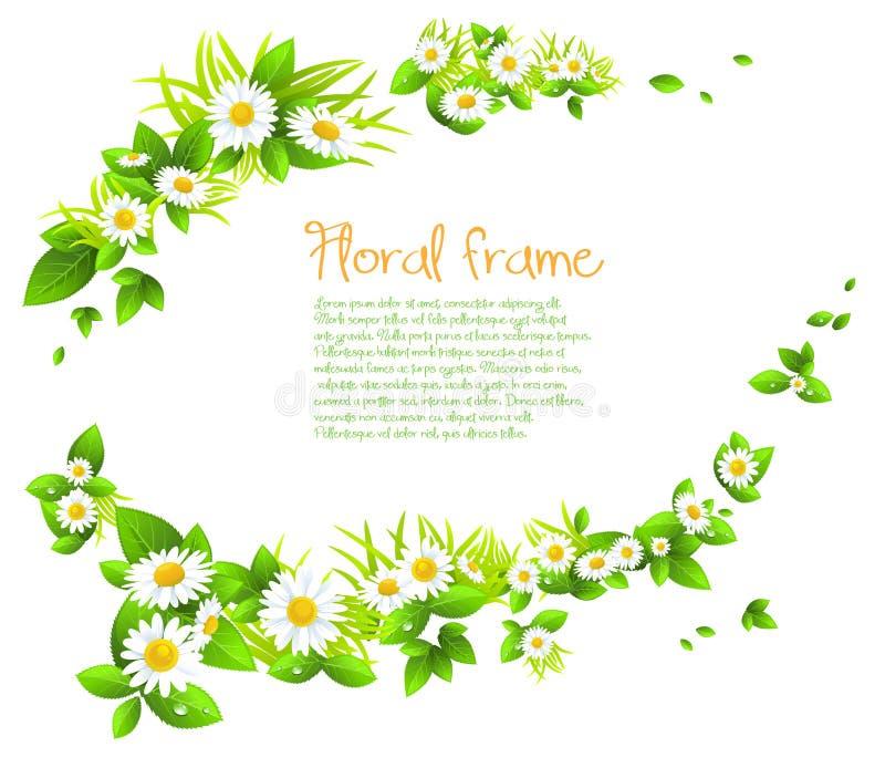 Cadre de camomille illustration stock