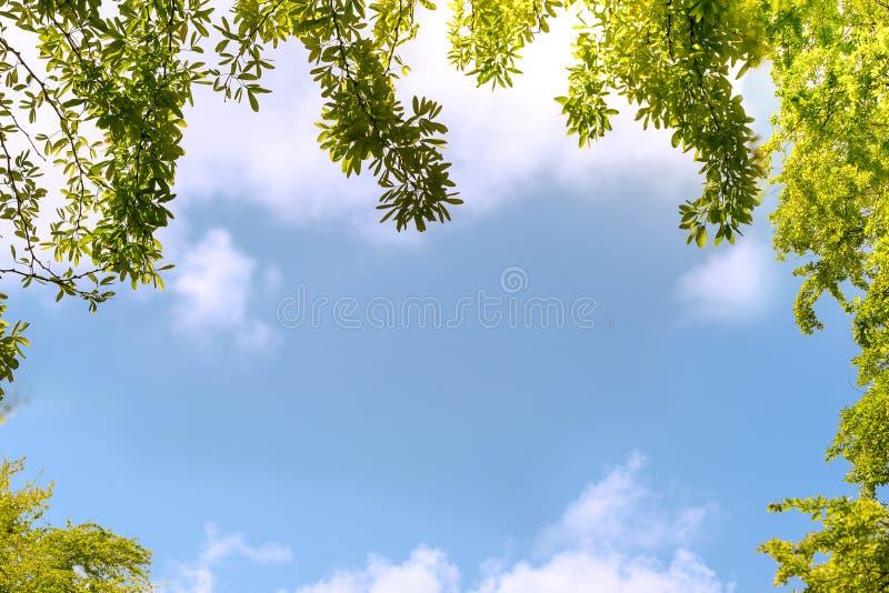 Cadre de feuille d'arbre photo stock