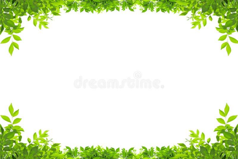 Cadre de feuille d'isolement sur le fond blanc photographie stock