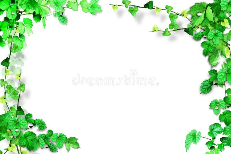 Cadre de feuille d'isolement sur le fond blanc image stock