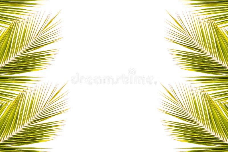 Cadre de feuille de noix de coco sur le blanc photo stock