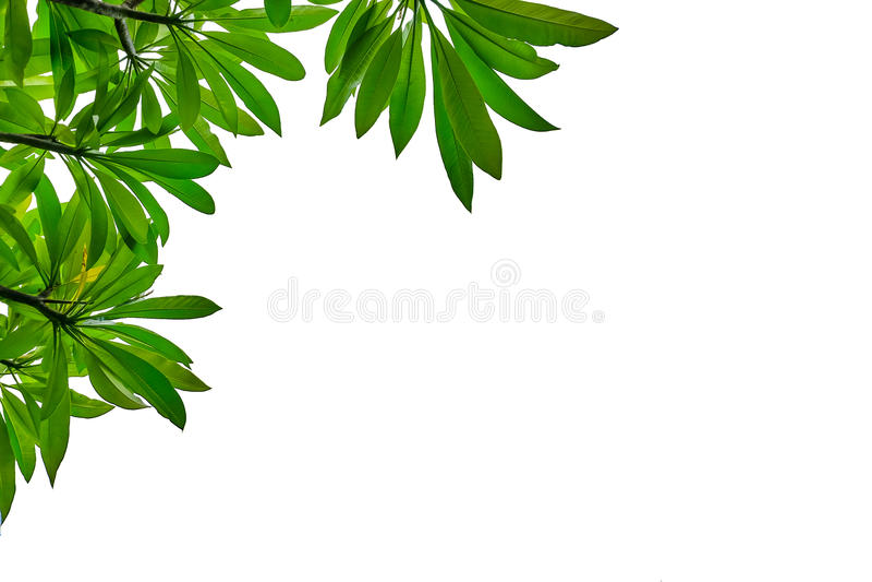 Cadre de feuille sur le fond blanc photos stock