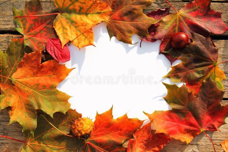Cadre de feuilles d'automne photos stock