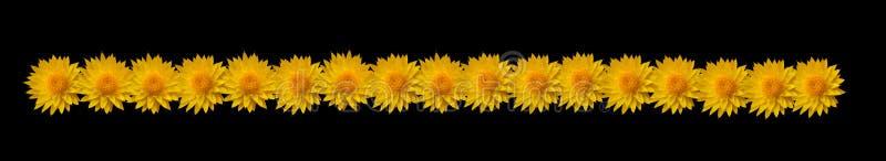 Cadre de fleur images stock