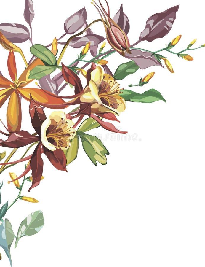 Cadre de fleur d'été dans un style d'aquarelle d'isolement Nom et prénoms de l'usine : Crocosmia, ancolie La fleur d'aquarelle po illustration libre de droits