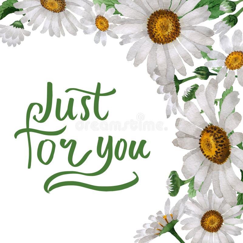 Cadre de fleur de camomille de Wildflower dans un style d'aquarelle d'isolement illustration de vecteur