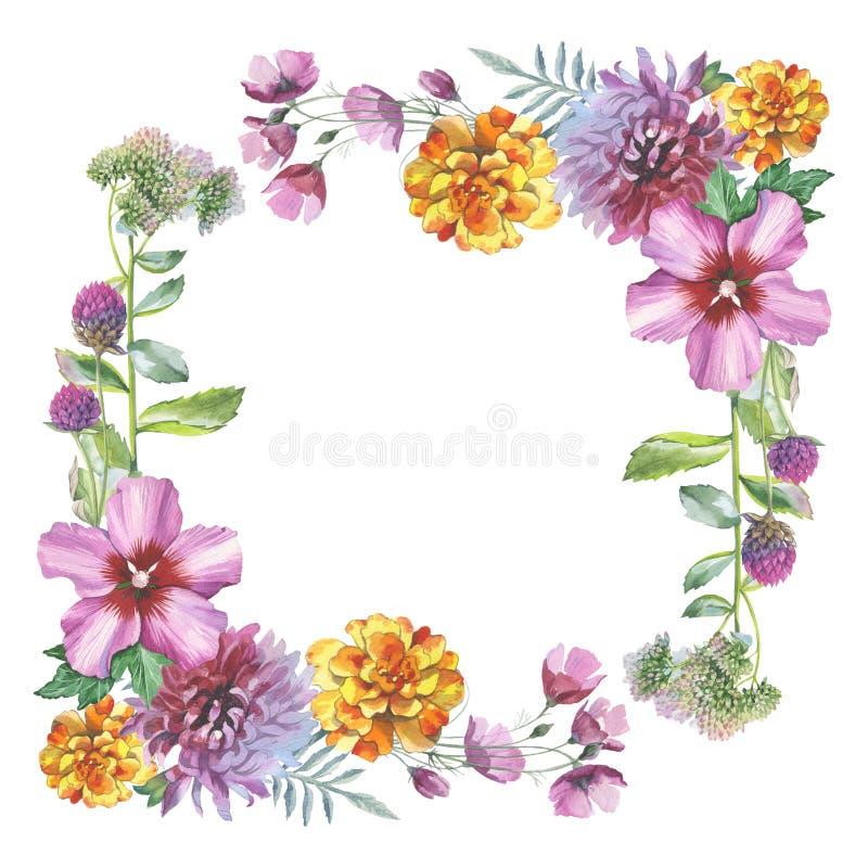 Cadre de fleur de chrysanthème de Wildflower dans un style d'aquarelle d'isolement illustration stock