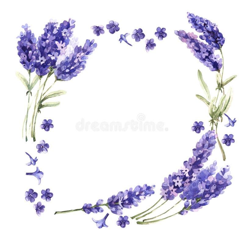Cadre de fleur de lavande de Wildflower dans un style d'aquarelle d'isolement illustration stock