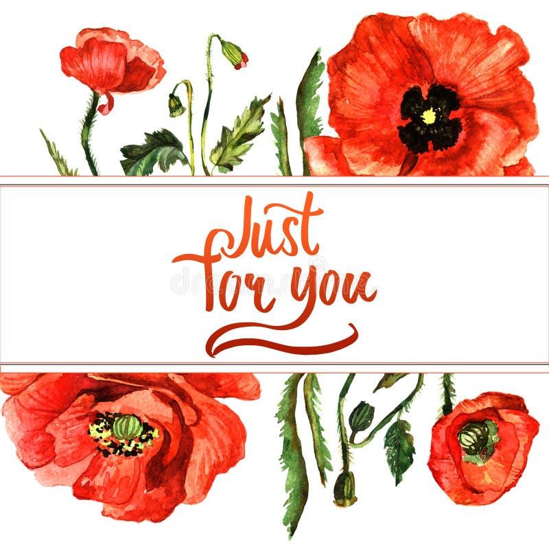 Cadre de fleur de pavot de Wildflower dans un style d'aquarelle d'isolement illustration libre de droits