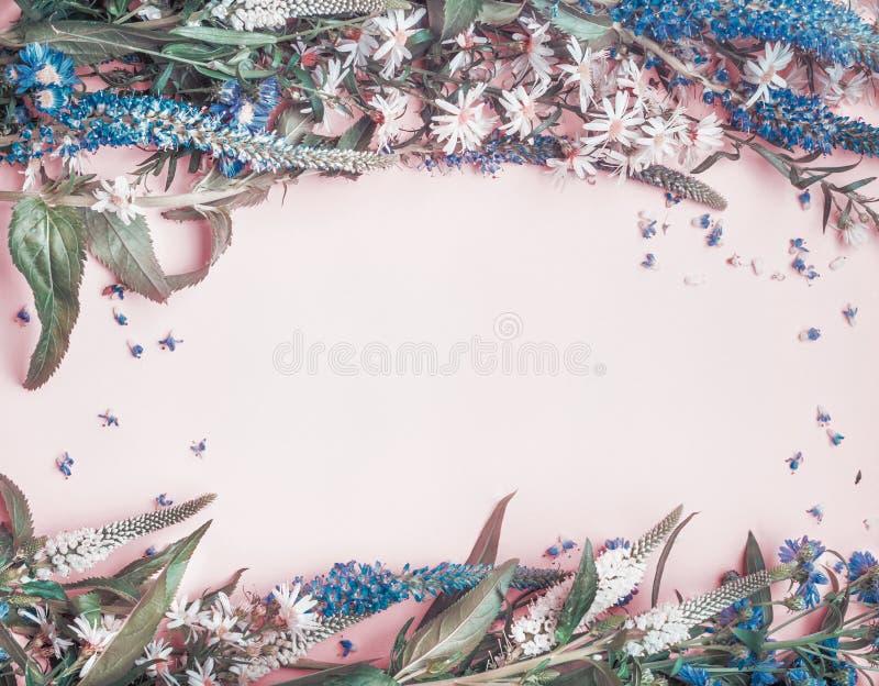 Cadre de fleurs sauvages sur le fond pâle rose photos stock