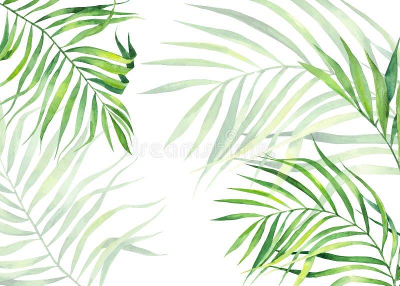 Cadre de fond dans le style d'aquarelle Feuilles exotiques de noix de coco Copie naturelle Cadre tropical vert clair pour des car illustration stock