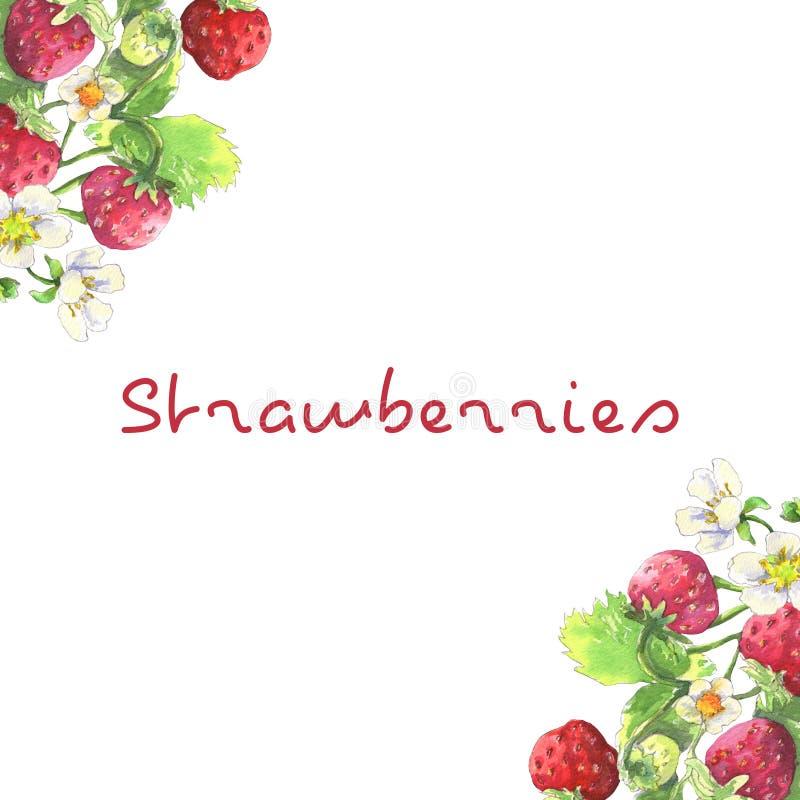 Cadre de fraisier illustration stock