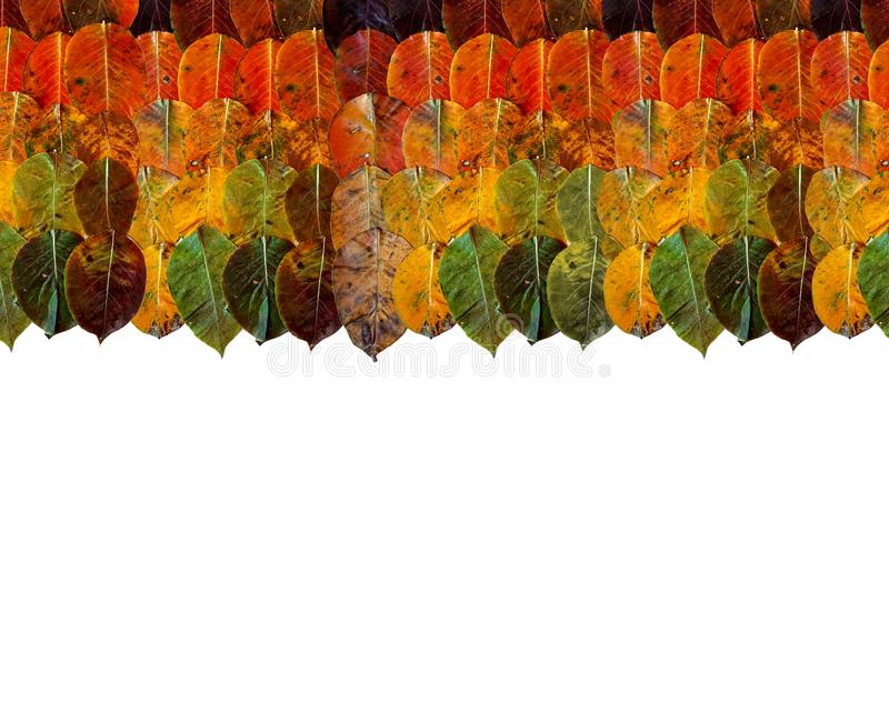 Cadre de frontière des feuilles d'automne sur le dessus gradient d'arc-en-ciel de mensonge vert brun jaune-orange sur l'un l'autr image libre de droits