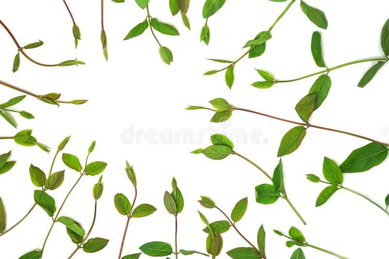 Cadre de guirlande fait de branches et feuilles de vert de ressort, d'isolement sur le fond blanc images stock