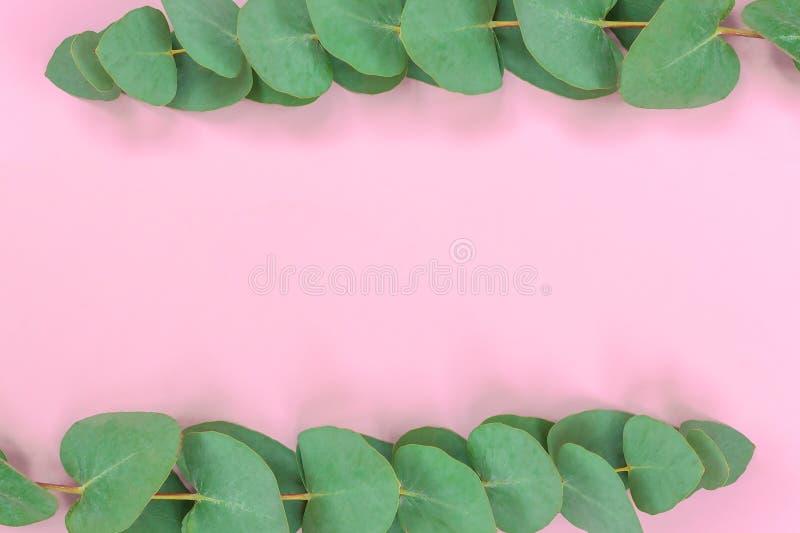 Cadre de guirlande fait en eucalyptus de branches sur le fond rose mou Configuration plate Vue sup?rieure images libres de droits