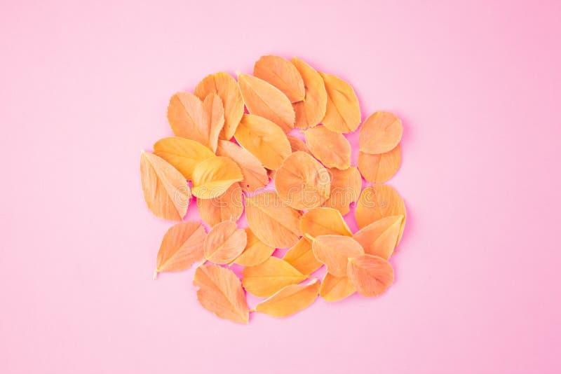 Cadre de guirlande fait de feuilles d'isolement sur le fond en pastel rose vue sup?rieure ?tendue photographie stock