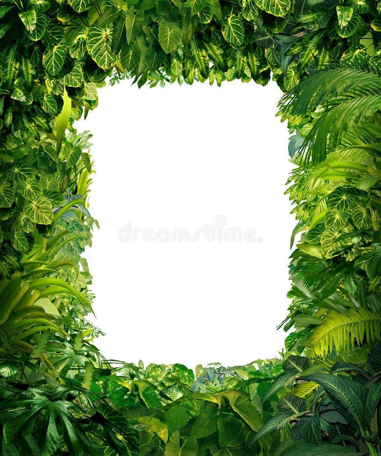 Cadre de jungle