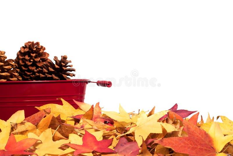 Cadre de lame d'automne avec des pinecones photographie stock libre de droits