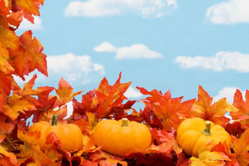 Cadre de moisson d'automne image stock
