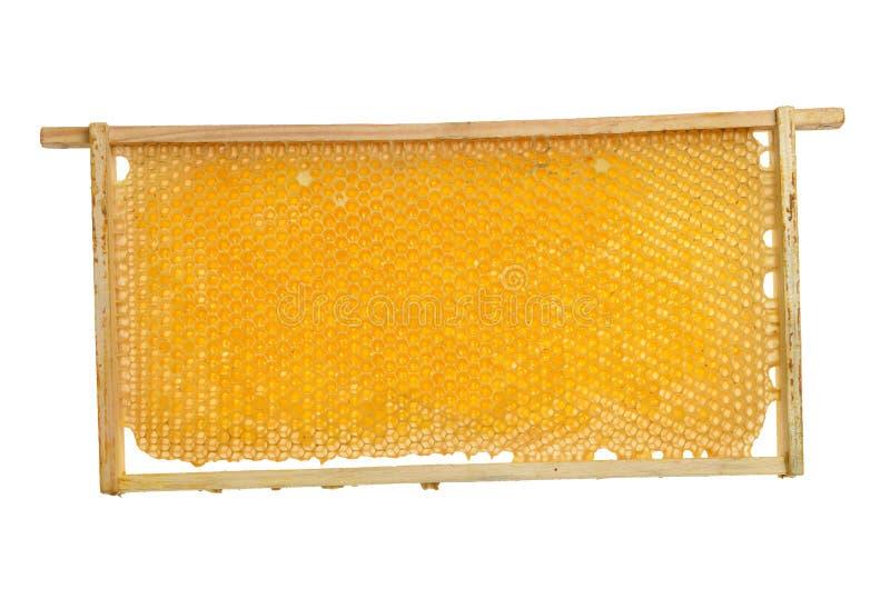 Cadre de nid d'abeilles avec du miel sur un fond blanc photos stock