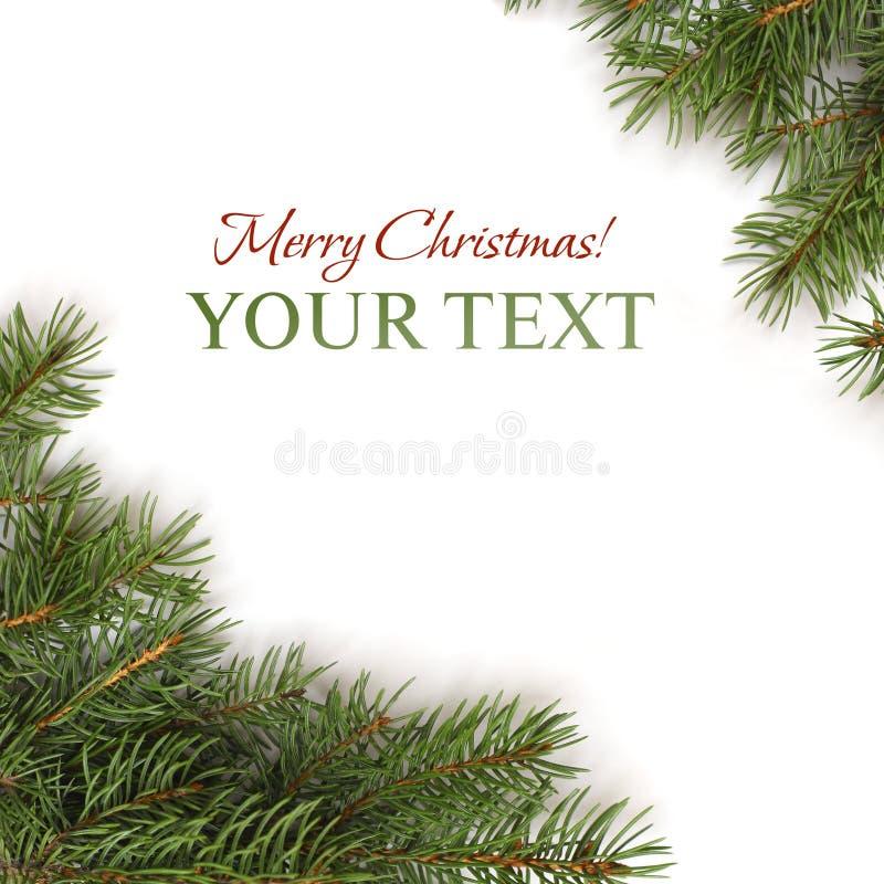Cadre de Noël - branchement d'arbre de Noël photos libres de droits