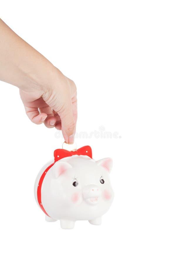 cadre de Porc-pièce de monnaie photo stock