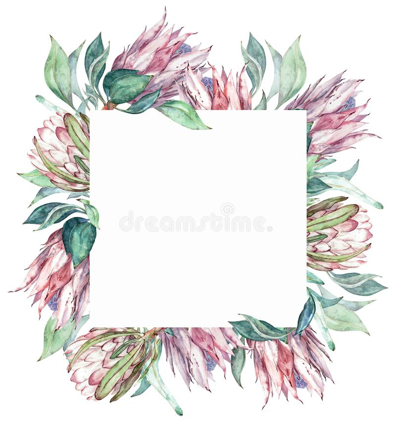 Cadre de protea de rose de place Illustration florale exotique d'aquarelle illustration stock
