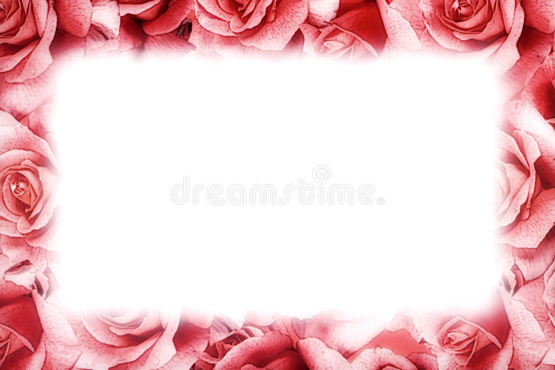 Cadre de rose de rose photos stock