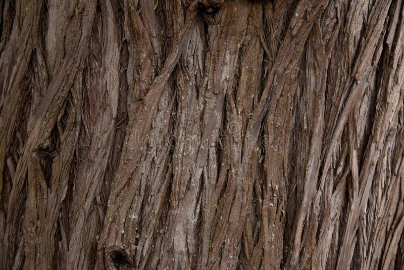 Cadre de texture d'arbre d'?corce plein en nature Fermez-vous de l'?corce de s?quoia image stock