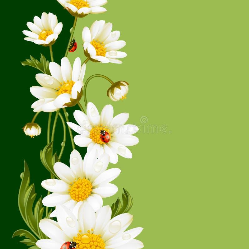 Cadre de vecteur avec les marguerites blanches et les coccinelles illustration stock