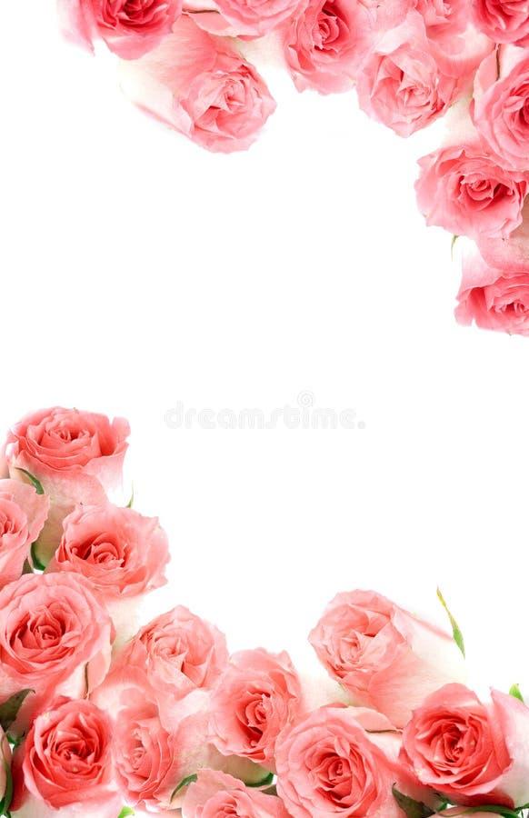 Cadre des roses. photographie stock