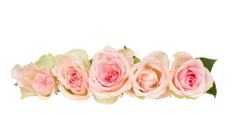 Cadre des roses roses image libre de droits