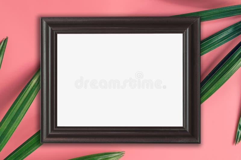 Cadre en bois et feuille verte sur le fond rose de couleur en pastel Tropi photo stock