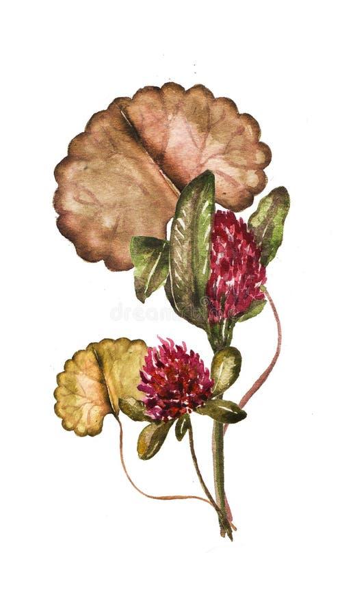 Cadre floral avec le trèfle et votre texte, illustration d'aquarelle illustration de vecteur